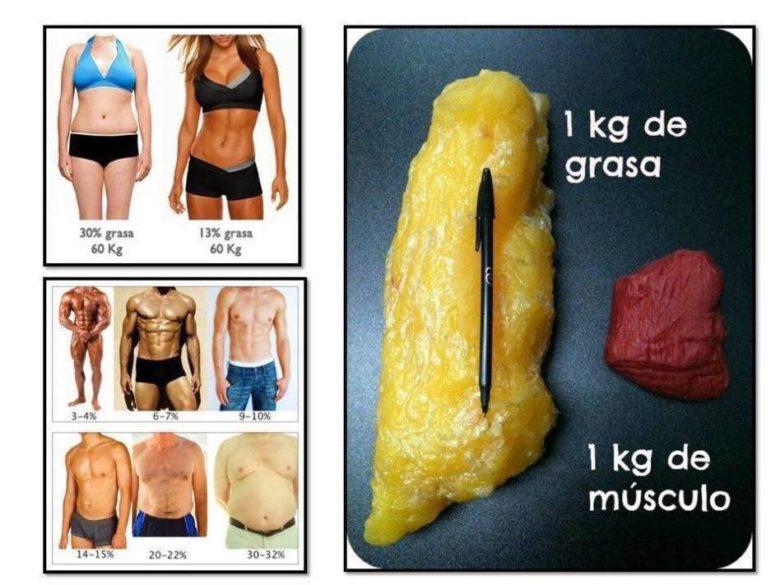 grasa vs peso